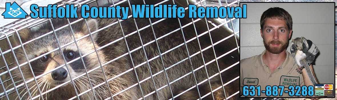 Suffolk County Wildlife and Animal Removal